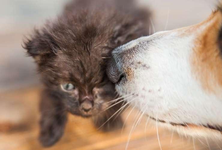Kitten & Puppy Pack
